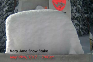 Mary Jane snow stake
