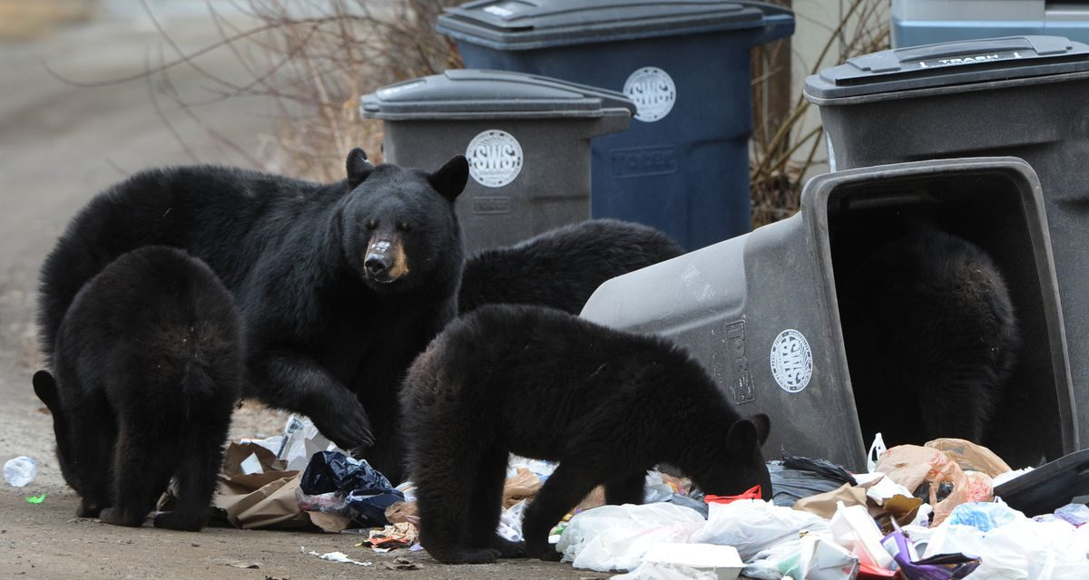 Bears Moving In