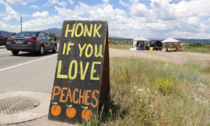 Say good-bye to this year's Colorado peaches