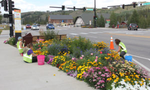 Flower Felons Working on Winter Park Town Flowers