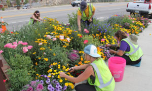 Winter Park Flowers Girls working the beds near Kings Crossing. Missing from the team Lucy Bindio, Alicia Moore.