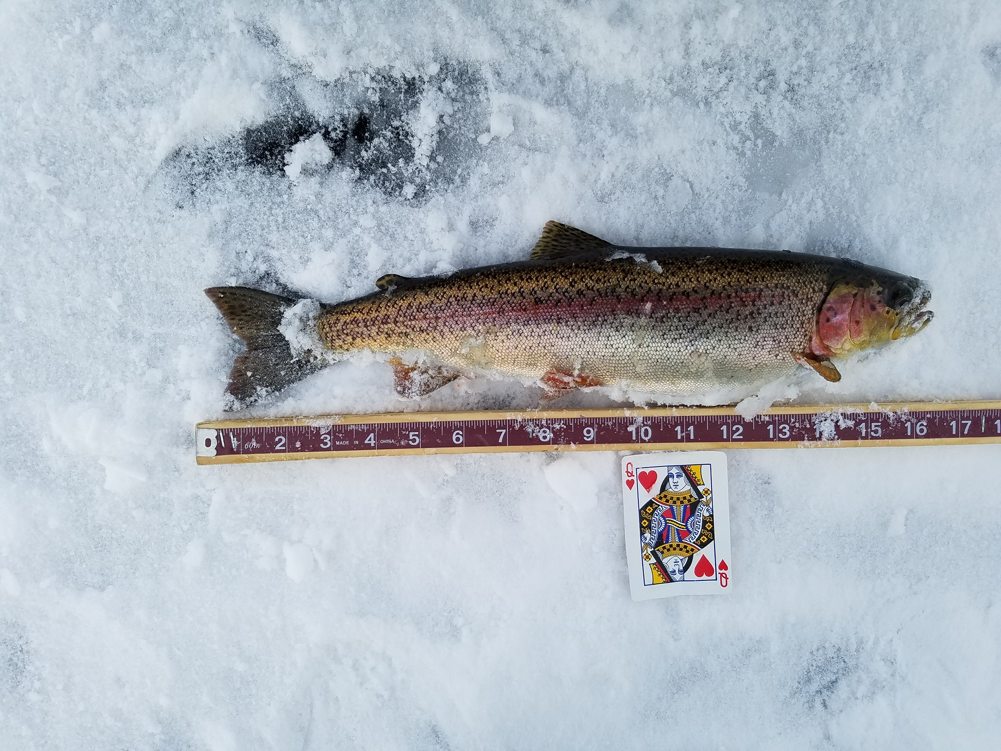 Three Lakes Ice Fishing Tournament
