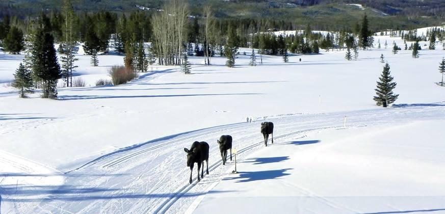 The Grand Lake Classic Race: It's Back!