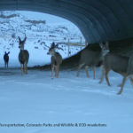 Wildlife Crossings Provide Safer Passage to Travelers