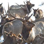 BLM winter travel restrictions begin December 15