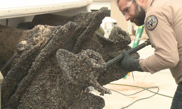 New fees protect Colorado waters from invasive mussels