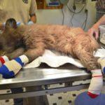 Bear injured in summer fire near Durango back in the wild