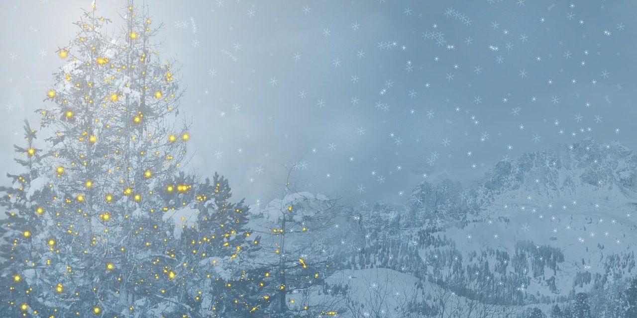Free Christmas Tree drop off