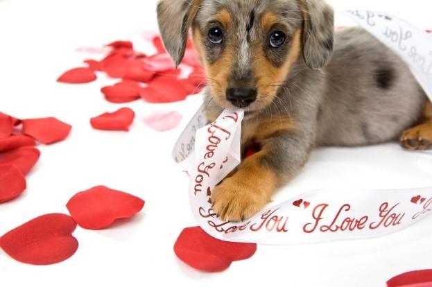 Love Your Pet Celebration