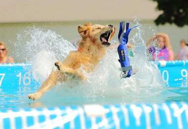 The World's Premier Canine Aquatics Competition is coming this weekend to Winter Park Resort
