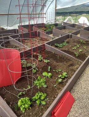 Grand Community Gardens: High Altitude Garden Maintenance