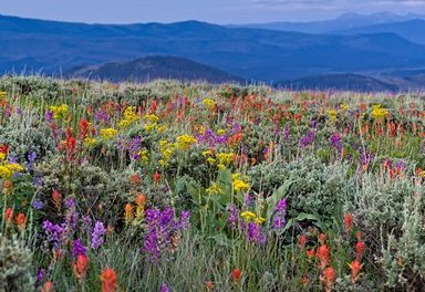 Five Great Wildflower Hikes
