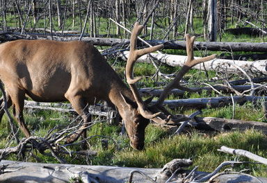 Colorado hunting access expands for 2019 season