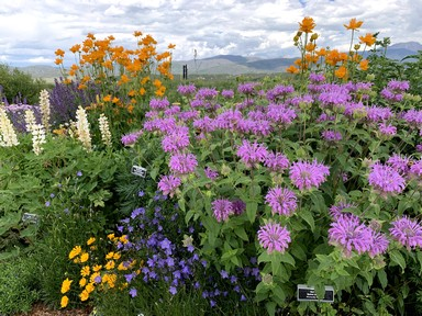 It's Peak Color Time for Mountain Perennials