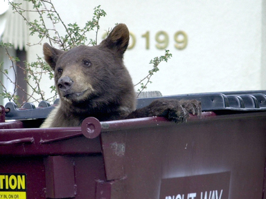 CPW reminds residents of Bear Aware responsibilities