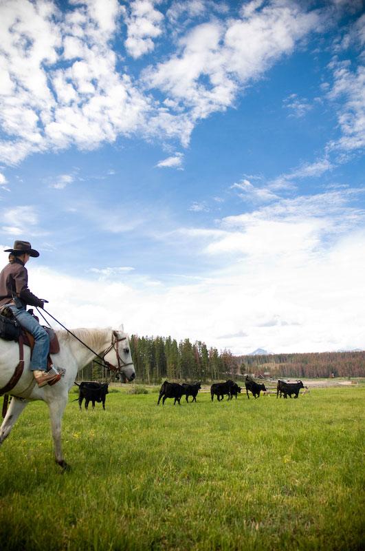 Cattle Branding Retreat