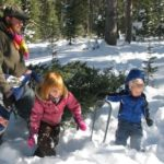 Christmas Tree permits now available
