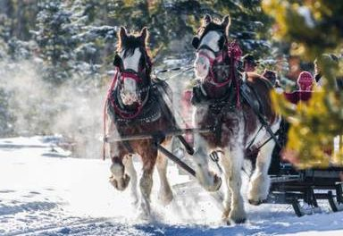 Christmas comes early as sleigh rides return to Snow Mountain Ranch