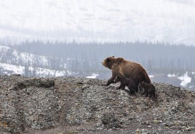 Bears becoming active across Colorado; time for residents to keep bears wild