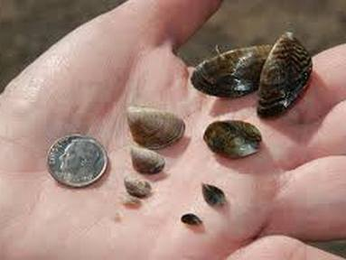 CPW's Aquatic Nuisance Species inspections underway in 2020