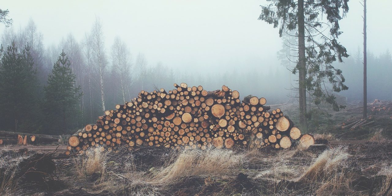 Logging begins on BLM's Strawberry area in Fraser Valley