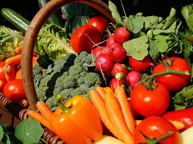 Grand Community Gardens: Best Bets for Grand County Vegetable Gardens