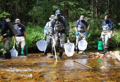 Electrofishing The Fraser River