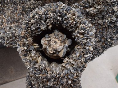 Colorado waters test free of invasive mussels